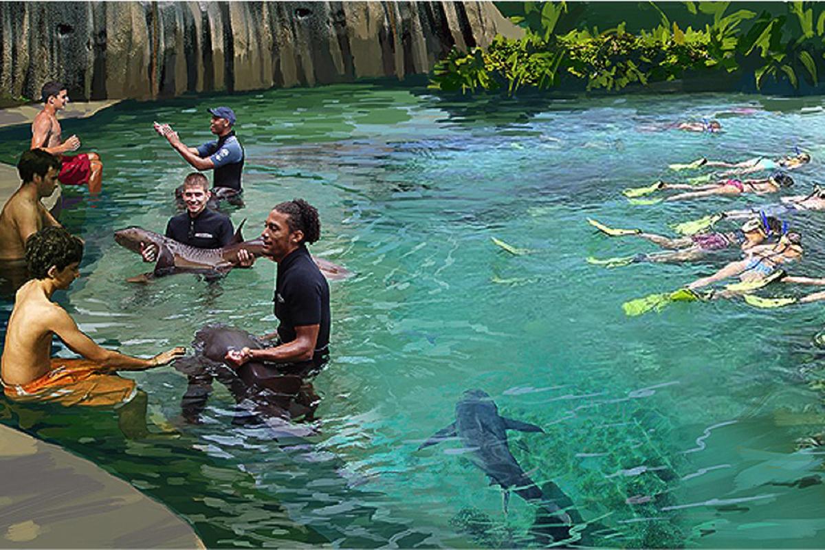 Shark Interaction Rendering
